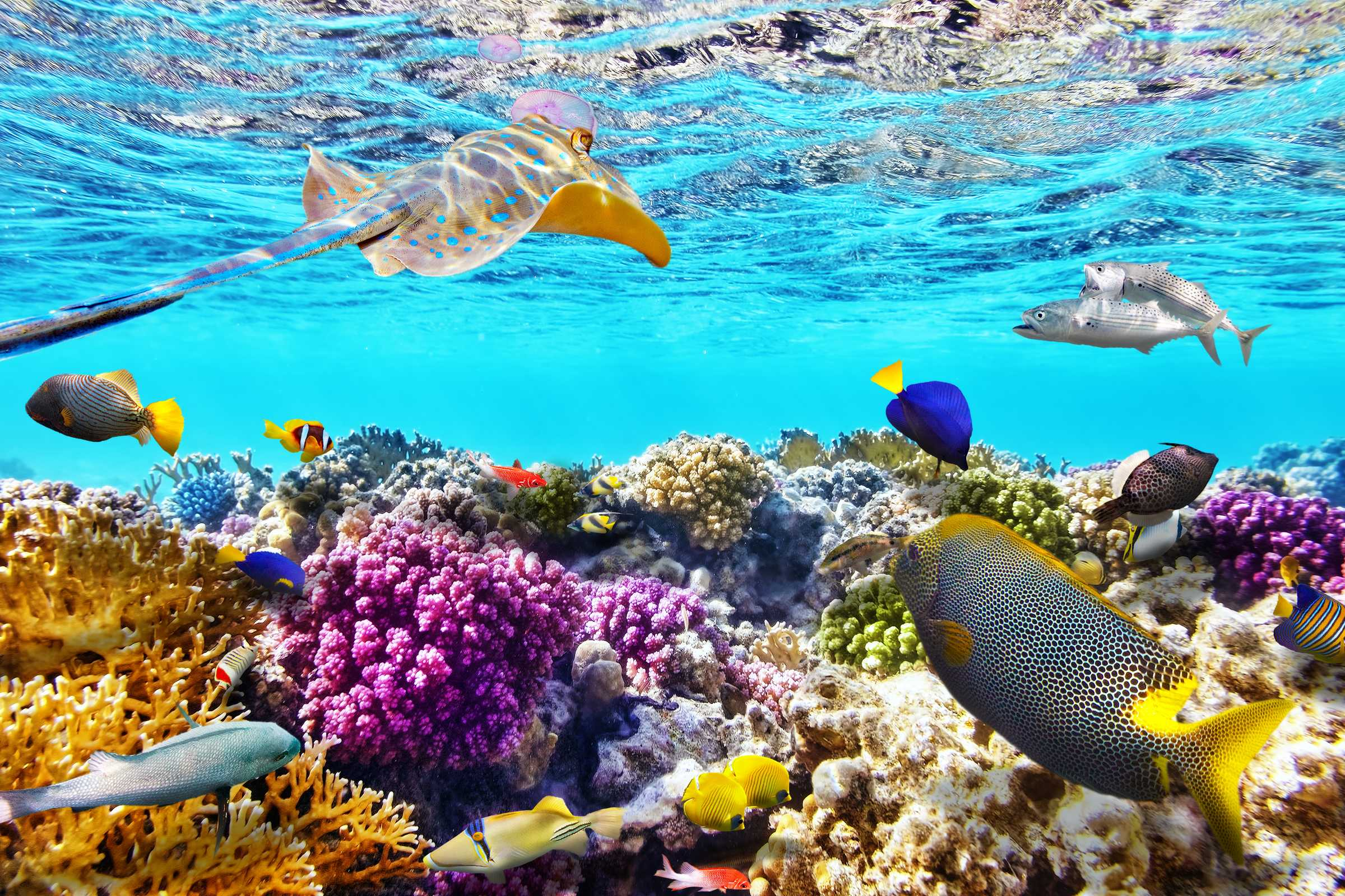 Great Barrier Reef National Park (Australia)