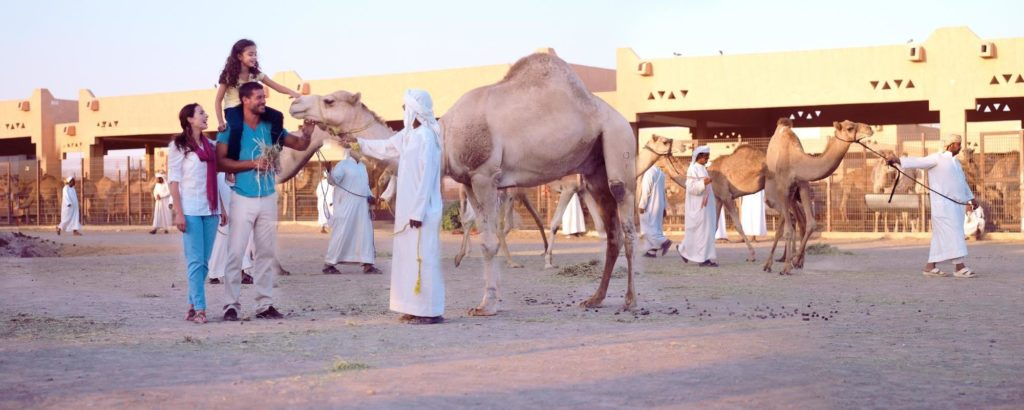 Al-Ain-Camel