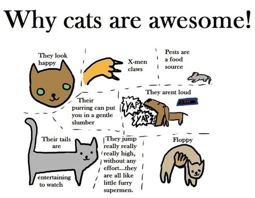 why_cats_are_awesome